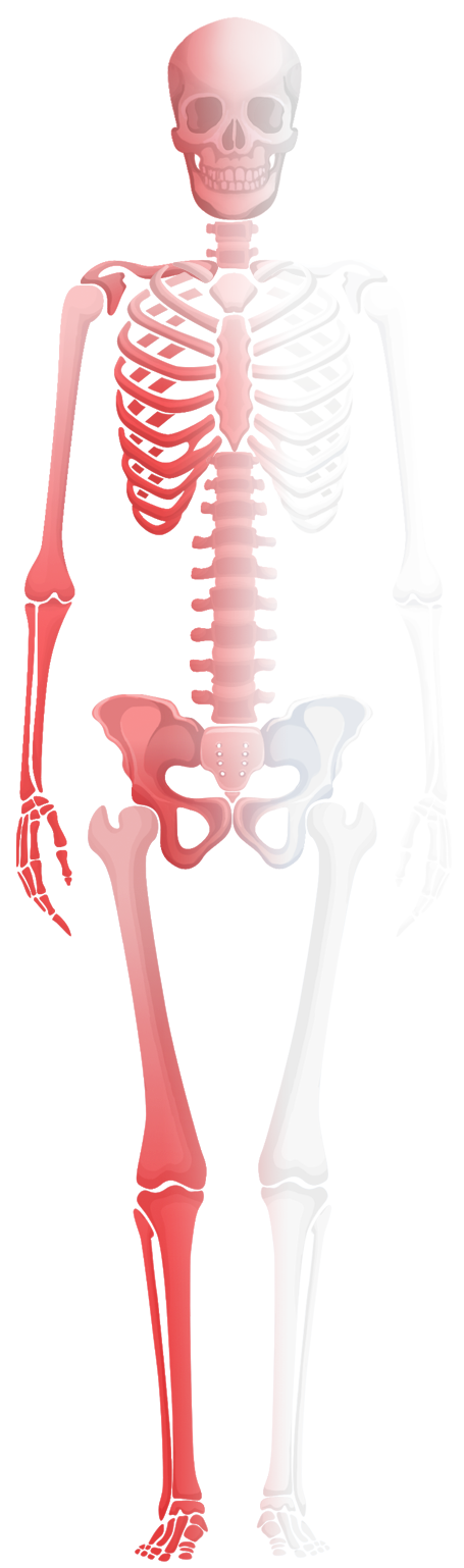 Charmant Knöchel Anatomie Knochen Fotos - Anatomie Ideen - finotti.info